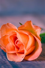 Preview iPhone wallpaper Orange rose close-up, bokeh