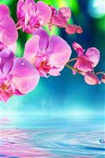 Preview iPhone wallpaper Phalaenopsis, pink flowers, water waves, drops, beautiful