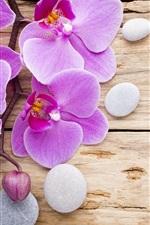 Preview iPhone wallpaper Phalaenopsis, purple flowers, stones