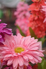 Preview iPhone wallpaper Pink flowers, petals, gerbera