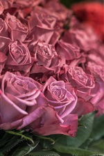 Preview iPhone wallpaper Pink roses close-up, bokeh
