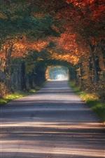 미리보기 iPhone 배경 화면 폴란드, 터널, 도로, 나무, 가을