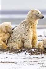 Preview iPhone wallpaper Polar bears, family, snow