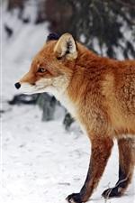 iPhone fondos de pantalla Vista lateral del zorro rojo, nieve, invierno