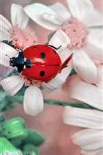 Preview iPhone wallpaper Red ladybug, white flowers, macro photography