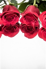 Preview iPhone wallpaper Red roses, reflection, white background