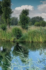Preview iPhone wallpaper River, trees, grass, green, nature scenery