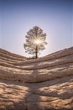 Rocks, mountain, tree, sun rays, glare