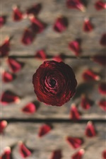 Preview iPhone wallpaper Rose, petals, wood board background