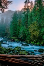 Skykomish, trees, river, moss, fog, USA