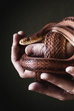 Preview iPhone wallpaper Snake and hands