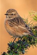Preview iPhone wallpaper Sparrow, birds, branch