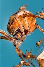 미리보기 iPhone 배경 화면 거미, 가족, 곤충