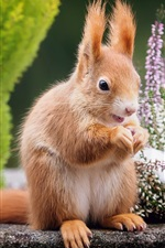 Preview iPhone wallpaper Squirrel, flowers background