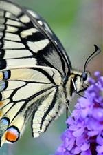 Preview iPhone wallpaper Swallowtail butterfly, little purple flowers