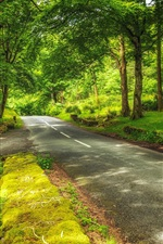 Preview iPhone wallpaper Switzerland, Hilterfingen, park, trees, road, green