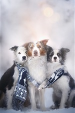 Preview iPhone wallpaper Three dogs, scarf, winter, snow