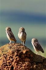 Three owls, stone