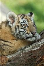 Preview iPhone wallpaper Tiger cub, rest, tree, look