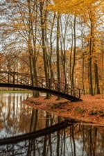 Trees, bridge, river, park, autumn