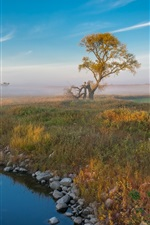 Preview iPhone wallpaper Trees, grass, creek, fog, morning