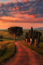 Preview iPhone wallpaper Tuscany, road, trees, fields, clouds, morning, Italy