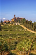 Preview iPhone wallpaper Tuscany, vineyard, greens, hills, trees, Italy