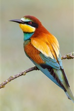 Preview iPhone wallpaper Two birds, European bee-eater