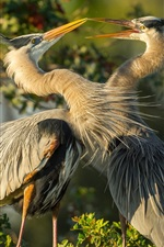 Preview iPhone wallpaper Two herons, birds