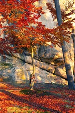 Preview iPhone wallpaper Ukraine, stones, trees, red leaves, autumn, sun rays