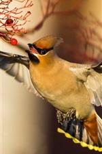 Preview iPhone wallpaper Waxwing, bird flight, wings, red berries