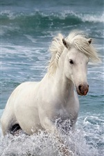White horse in the sea, waves