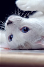 Preview iPhone wallpaper White kitten, blue eyes, playful