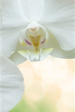 Preview iPhone wallpaper White phalaenopsis, petals