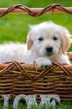 Filhote de cachorro branco na cesta