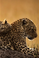 Preview iPhone wallpaper Wild Cats, leopards, cub