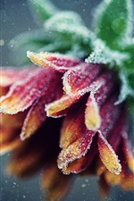 Preview iPhone wallpaper Winter, frost flower