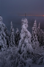 Aperçu iPhone fond d'écranNuit d'hiver, neige, arbres