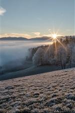 Winter, slope, grass, trees, snow, sunrise, morning