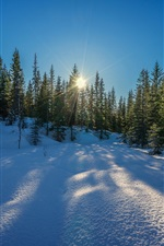Preview iPhone wallpaper Winter, snow, trees, sun rays, blue sky