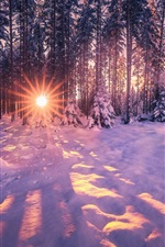 Preview iPhone wallpaper Winter, snow, trees, sun rays, glare