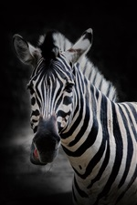 Preview iPhone wallpaper Zebra, black background