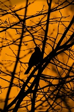 Preview iPhone wallpaper Bird in tree, twigs, silhouette, dusk