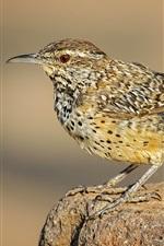 Bird, tail, beak