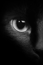 Preview iPhone wallpaper Black cat face, eyes, darkness