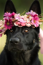 Preview iPhone wallpaper Black dog, wreath, flowers