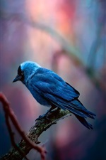 Preview iPhone wallpaper Blue feather bird, forest