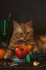 Cat and fruit, grapes, tangerines, apples