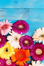 Preview iPhone wallpaper Colorful gerbera flowers, blue background
