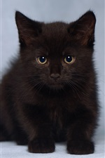 Preview iPhone wallpaper Cute furry black kitten